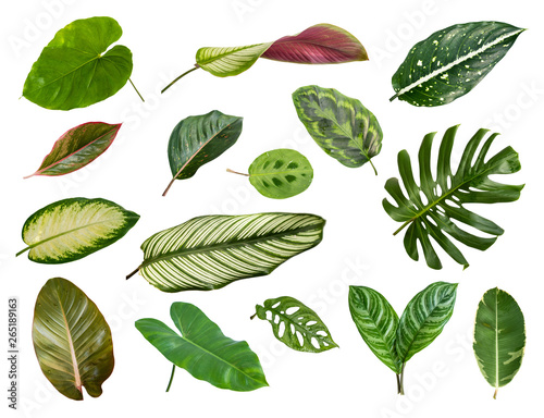 Photo  Variety of tropical leaves on white background