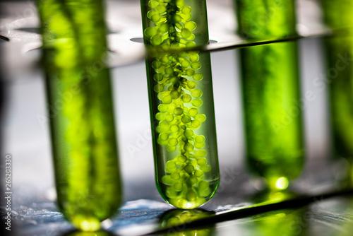 Photobioreactor in lab algae fuel biofuel industry, Algae fuel, Algae research i Wallpaper Mural