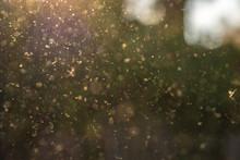 Staub, Pollen Und Kleine Parti...
