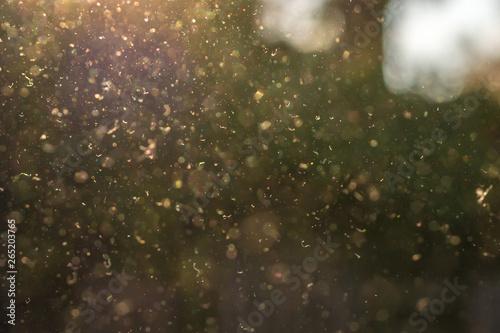 Staub, Pollen und kleine Partikel fliegen durch die Luft im Sonnenschein Slika na platnu