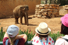 Young Girls Enjoy Observing An Elephant In Zoo