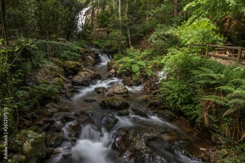 Fototapeten Forest river Sever do Vouga, Portugal