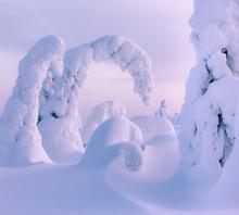 Trees Bending Into Strange Shapes Under Heavy Snow
