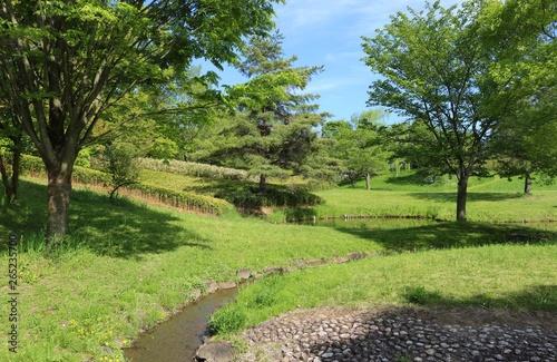 Tuinposter Wijngaard 風景 新緑 緑 池 木 空 爽やか 茨城