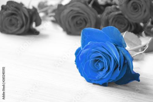 niebieska-roza-na-czarno-bialym-tle