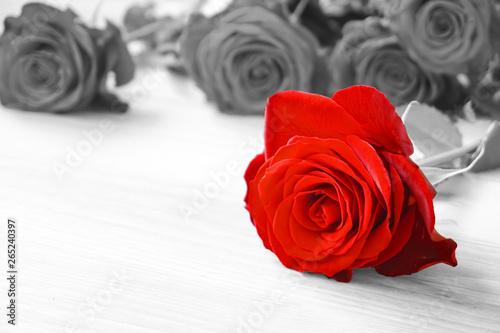Obrazy do salonu Czerwone róże odseparowane od czarno białego tła