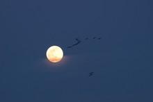 平成最後の満月を飛ぶ...