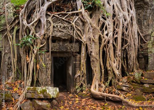 фотография  Mystical Overgrown Ta Prohm Temple, Angkor, Cambodia