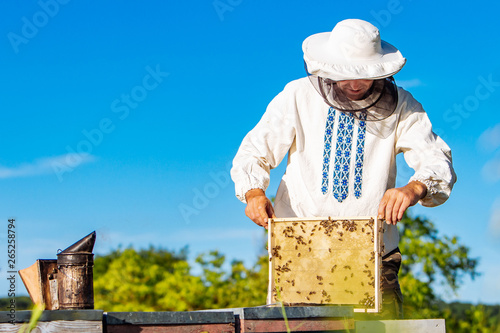 Beekeeper inspecting honeycomb frame at apiary at the summer day Canvas Print
