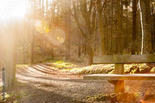 Spoed Fotobehang Weg in bos A bench in a scottish forest lit by golden sunset light
