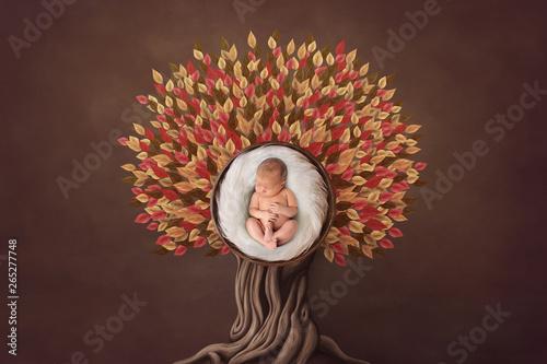 Pinturas sobre lienzo  Autumn floral newborn portrait in basket round form