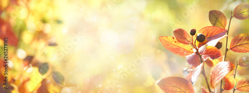 Foto auf AluDibond Gelb Beautiful colorful autumn natural background . Orange red autumn foliage on blurred gold background glows in sunlight outdoors in nature. Template, copy space, wide format.