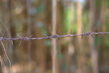 Close-up Of Metal Barbed Wire ...