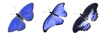 Tropical Blue Butterfly. Isolated On White