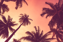 Tropical Palm Tree With Colorf...