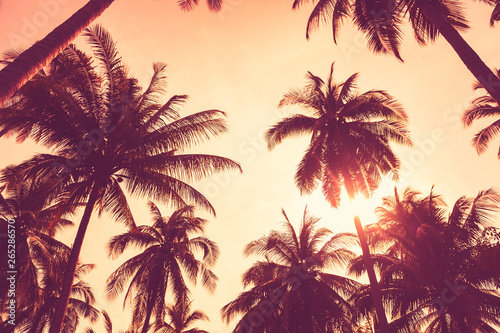 Foto auf AluDibond Hochrote Tropical palm tree with colorful bokeh sun light on sunset sky cloud abstract background.