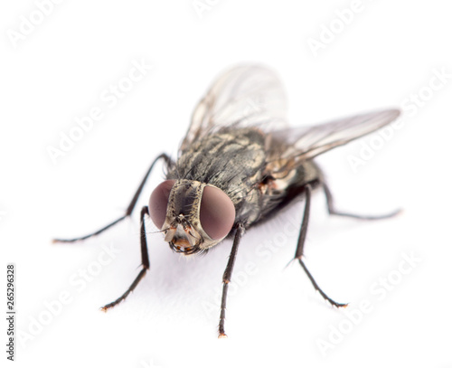 fly isolated on a white Wall mural