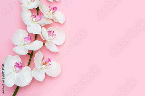 Keuken foto achterwand Orchidee Orchid flower on a pink background, space for a text, flat lay. Top view