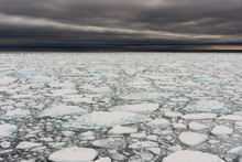 A View Of The Melting Sea Ice On The Arctic Ocean At 81 Degrees, North Of The Svalbard Islands, Arctic