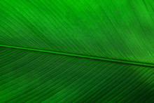 Green Tropical Leaf Texture