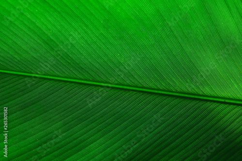 green tropical leaf texture - 265301582