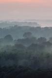 Mistyczny widok z góry na las pod mgłą wczesnym rankiem. Niesamowita mgła między warstwami z sylwetkami drzew w tajdze pod niebiańskim niebem. Rano nastrojowy, minimalistyczny krajobraz o majestatycznej naturze. - 265306378