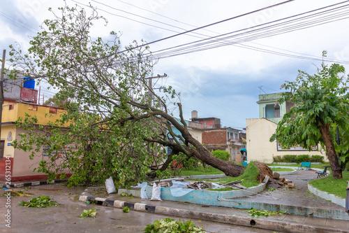 Santa Clara, Cuba, September 10, 2017: Trees fallen to the ground, damage from H Canvas Print