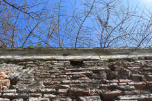 Old Brick Wall And Branches Against The Blue Sky