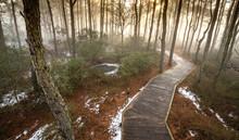 Wooden Walkway Through The Marsh Trail - Assateague Island National Seashore