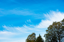 Unusual, Cloud Formation With Chemtrails, Contrails And Trees