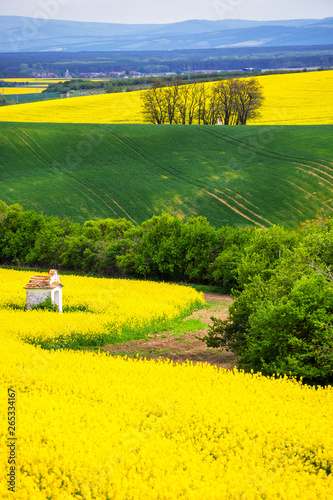 Spoed Foto op Canvas Geel Scenic view of beautiful Moravian Tuscany landscape in South Moravia, Czech Republic.