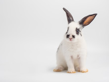 White Baby Rabbit On White Background. Lovely Baby Rabbit ,white Body And Black Spot On Eyes Ears And Nose.