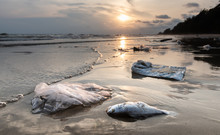 Death Fish And Plastic Pollution Environment.