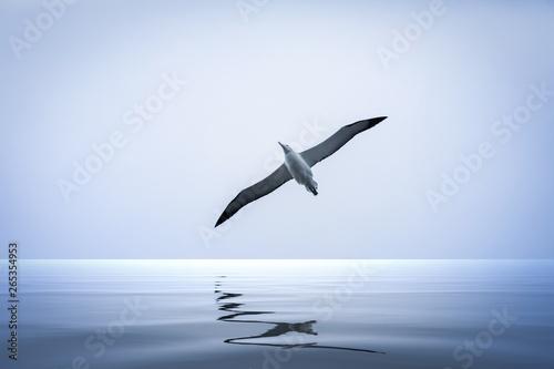 Fotografia, Obraz Albatross bird over the sea