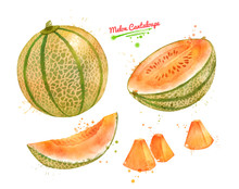 Watercolor Illustration Of Melon Cantaloupe