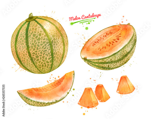 Obraz na plátně Watercolor illustration of Melon Cantaloupe
