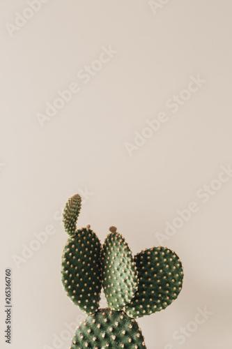 Cactus Closeup of cactus on beige background.