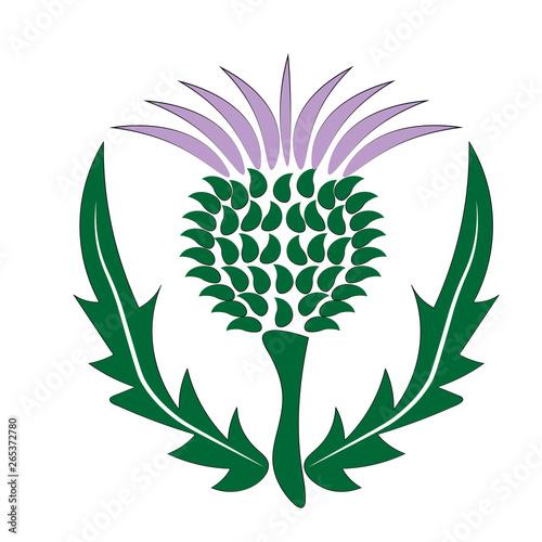 Fototapeta thistle Scotland symbol and emblem