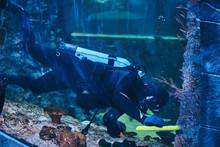 Close Up Photo Of A Scuba Diver Swimming Underwater In An Oceanarium