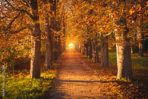 Cuadros en Lienzo Tree avenue in autumn during sunset