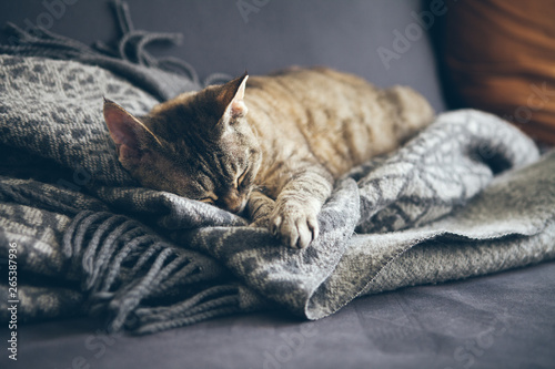 Keuken foto achterwand Kat Tabby cat sleeping on gray plaid wool blanket with tassels. Sleeping cat - perfect dream. Indoor shoot with natural light, warm and nice ambiance