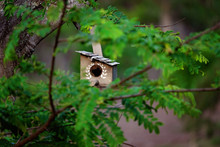 Small Timber Bird House In A Tree