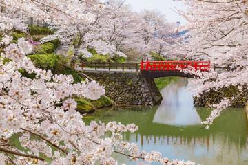 満開の桜 日本の旅行