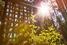 Sunlight With Lens Flare Shining On Green Sprout - Concept Of Clean Energy And Photosynthesis