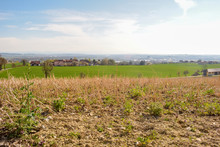 Field And Blue Sky. Landscape Shot Mauthausen In Upper Austria / Austria