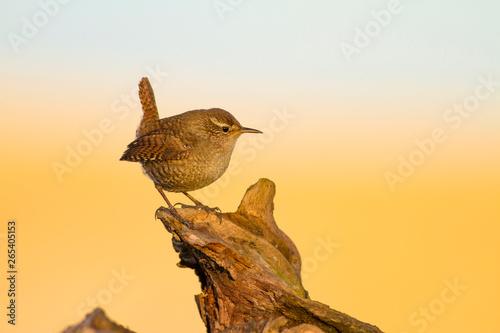 Valokuva  Cute little bird