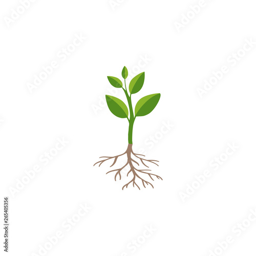 Vászonkép Green plant sprout isolated on white background