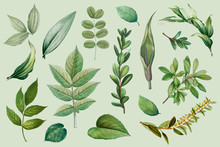 Plant Leaves Collection