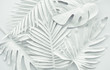 Leinwanddruck Bild - Collection of tropical leaves,foliage plant in white color.Abstract leaf decoration design background