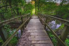 Wooden Bridge Forest